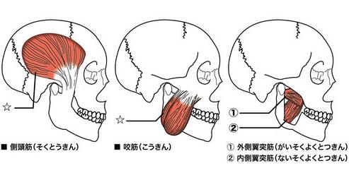 イーク表参道カイロプラクティック|骨盤矯正・肩こり・腰痛・神経症状|②咀嚼筋群:エクササイズコメント
