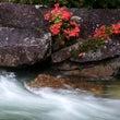 渓谷に咲く花