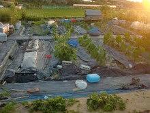 耕作放棄地を剣先スコップで畑に開拓!有機肥料を使い農薬無しで野菜を栽培する週2日の農作業記録 byウッチー-130708ウッチー式・今日の農作業の出来栄え01