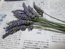 ラベンダー13本