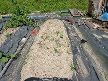 耕作放棄地を剣先スコップで畑に開拓!有機肥料を使い農薬無しで野菜を栽培する週2日の農作業記録 byウッチー-130708サツマイモあいこまち0618植分苗取定植03