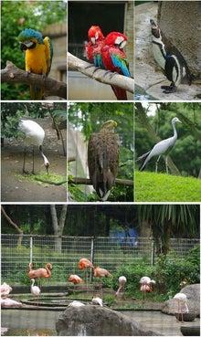毎日はっぴぃ気分☆-鳥類