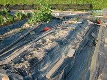 耕作放棄地を剣先スコップで畑に開拓!有機肥料を使い農薬無しで野菜を栽培する週2日の農作業記録 byウッチー-130709サツマイモあいこまち0618植分苗取定植09