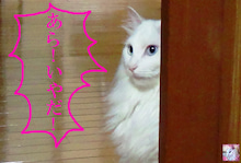 幸原幸子は見た!