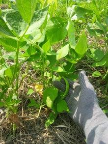 炭素循環農法と自然農法組み合わせてやりたいな~~-DSC_0292.JPG