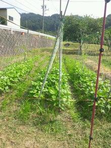 炭素循環農法と自然農法組み合わせてやりたいな~~-DSC_0284.JPG