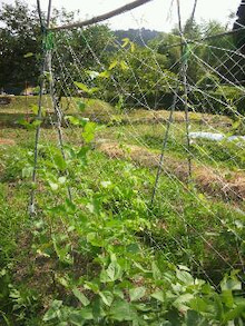 炭素循環農法と自然農法組み合わせてやりたいな~~-DSC_0297.JPG