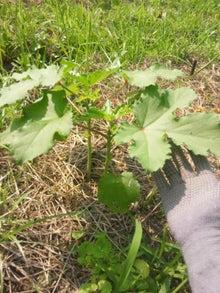 炭素循環農法と自然農法組み合わせてやりたいな~~-DSC_0291.JPG