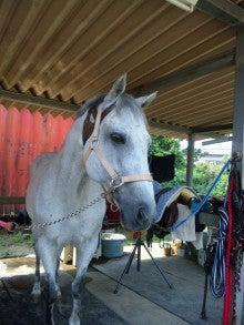 富里ホースパークの馬たち-フィガロ