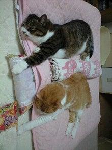 ずれずれブログ…湘南で猫と暮らせば…-120829_2050~0001.JPG