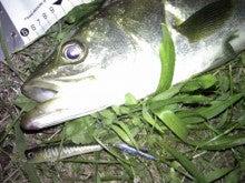 $Flowerの魚と遊ぶ日々-130714_011731.jpg