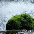 涼しい渓流
