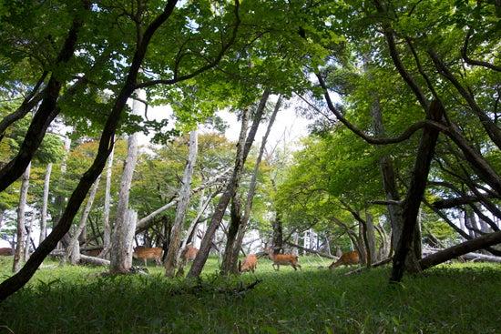 the blog of  kenshin-photo.com-鹿