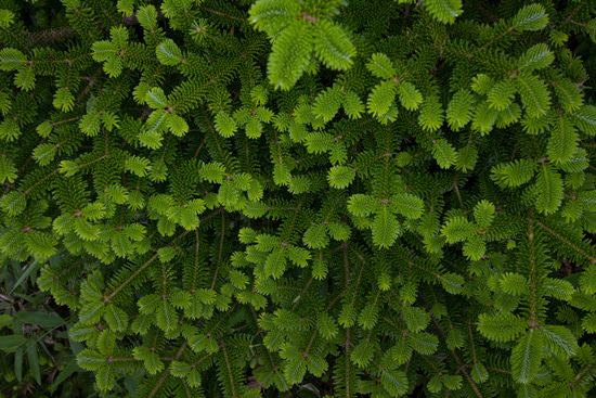 the blog of  kenshin-photo.com-きれいな植物