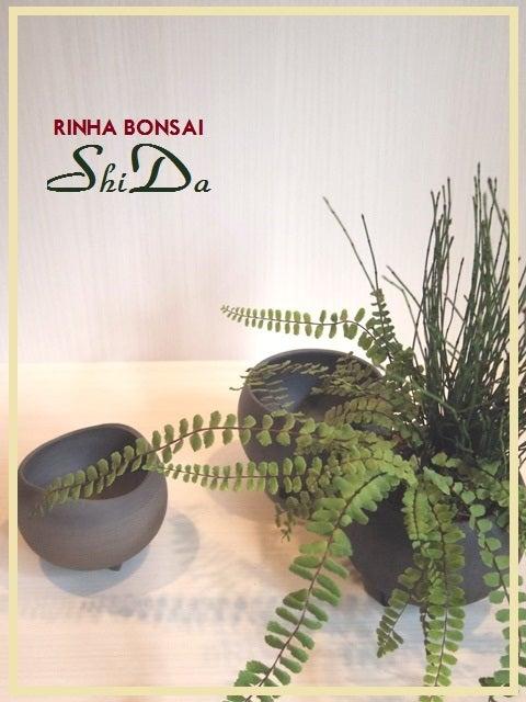 bonsai life      -盆栽のある暮らし- 東京の盆栽教室 琳葉(りんは)盆栽 RINHA BONSAI-琳葉盆栽 チャセンシダ ヒメトクサ