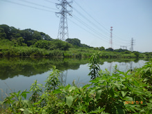 さる吉の釣り日記 IN千葉 ~印旛放水路編3~