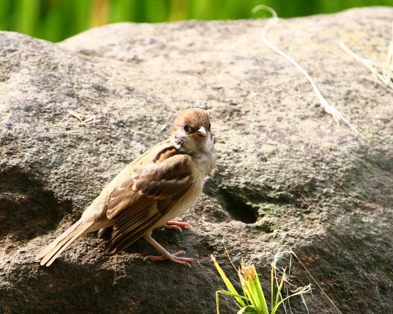 *野鳥ってかわいいね