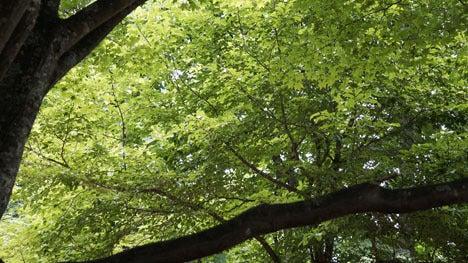 ワンコを連れて!子供と一緒にキャンプに行こう!-2013北軽井沢スウィートグラス54