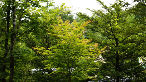 ワンコを連れて!子供と一緒にキャンプに行こう!-2013北軽井沢スウィートグラス55