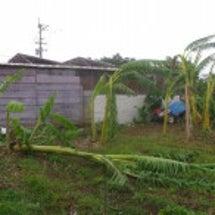台風7号の様子: バ…