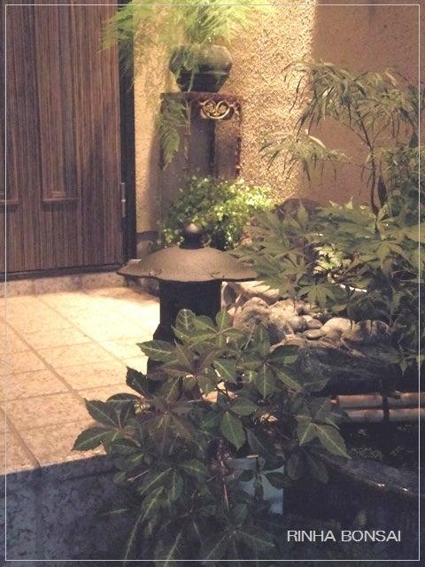 bonsai life      -盆栽のある暮らし- 東京の盆栽教室 琳葉(りんは)盆栽 RINHA BONSAI-琳葉盆栽 南部鉄器 灯篭