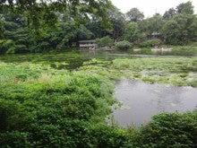 ルナシャイン・輝☆ブログ-柿田川富士山の湧き水群1