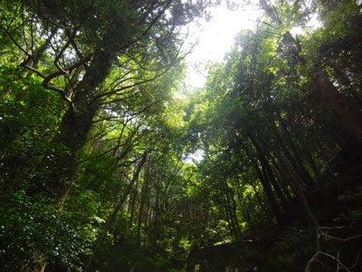 ルナシャイン・輝☆ブログ-天城隧道2