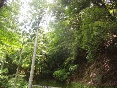 ルナシャイン・輝☆ブログ-天城隧道3