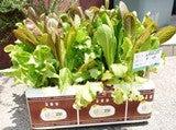 大好き☆ベランダ菜園-家庭菜園キット、はこ畑