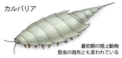 川崎悟司 オフィシャルブログ 古世界の住人 Powered by Ameba-昆虫の祖先カルバリア