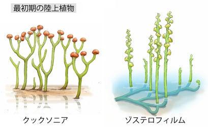川崎悟司 オフィシャルブログ 古世界の住人 Powered by Ameba-最初期の陸上植物