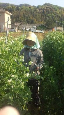 若松屋儀兵衛の有機野菜店-若松農園収穫