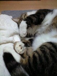 ずれずれブログ…湘南で猫と暮らせば…-130723_2241~0001.jpg