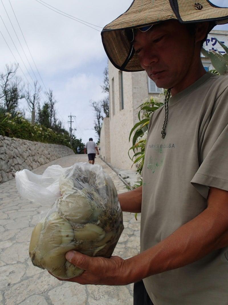 歩き人ふみの徒歩世界旅行 日本・台湾編-収穫