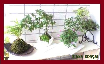 bonsai life      -盆栽のある暮らし- 東京の盆栽教室 琳葉(りんは)盆栽 RINHA BONSAI-琳葉盆栽