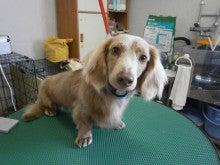 トリミング・わんちゃん保育園・ペットホテル 犬たま