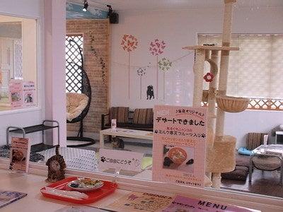 マロンの物語 feat.猫カフェ Cats-猫カフェ内観