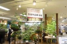 $盆栽 清香園 スタッフブログ