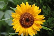 四季の花とキララ