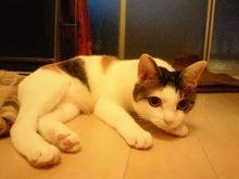 PFL★MIKIのブログ-2013072719030000.jpg
