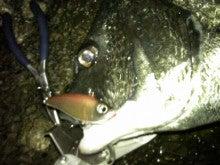 $Flowerの魚と遊ぶ日々-130728_022333.jpg