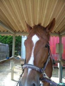 富里ホースパークの馬たち-最近さっぱりしましたぁ。