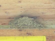 pepeのブログ-ツバメの巣