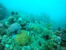 海南潜水 hainandivingのブログ-フィリピン6-4