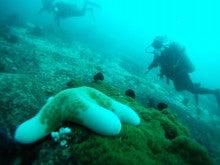 海南潜水 hainandivingのブログ-フィリピン3