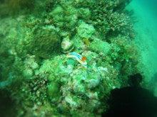 海南潜水 hainandivingのブログ-フィリピン7-14