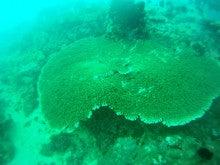 海南潜水 hainandivingのブログ-フィリピン7-11