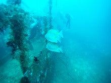 海南潜水 hainandivingのブログ-フィリピン7-6