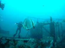 海南潜水 hainandivingのブログ-フィリピン7-5