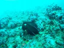 海南潜水 hainandivingのブログ-フィリピン6-7